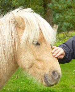 Coaching med heste også kaldet equicoaching er en god mulighed for at arbejde med sin personlige udvikling