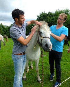 Unge ledere træner samarbejde med Hesteassisteret læring sammen med Nanna Morgunbirta fra Isafold