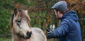 Hesteassisteret læring forstærker læring