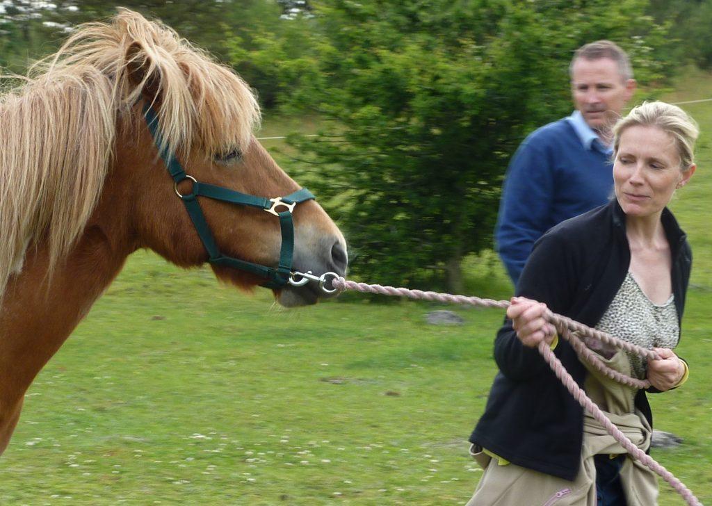 Lederudvikling med heste for team fra Coop Trading