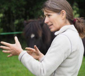 Teamudvikling og lederudviklings samt coaching med heste