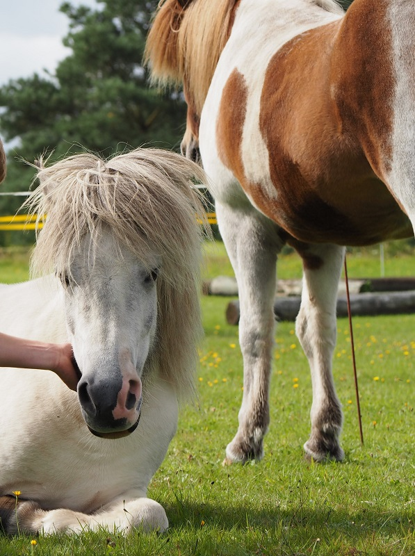 Heste som sparringspartnere i lederudvikling med heste