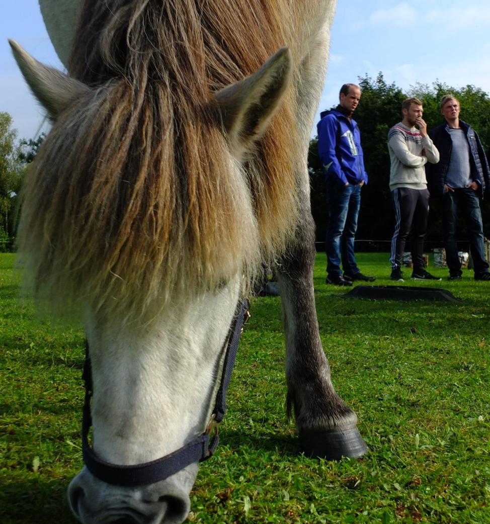 Hesteassisteret lederudvikling. Loa fra Isafold står klar.